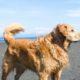 brown medium coated dog at the beach